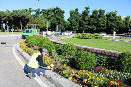 Amia Verona ha reso noto gli interventi di manutenzione del verde di questi giorni