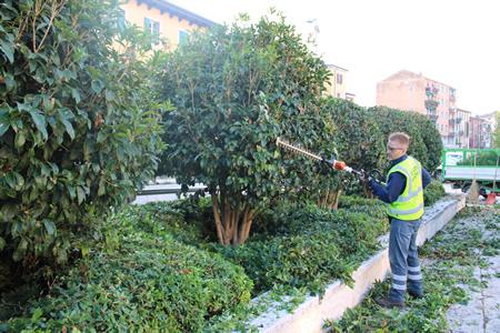 Continua a pieno ritmo a cura di Amia la manutenzione del verde pubblico a Verona
