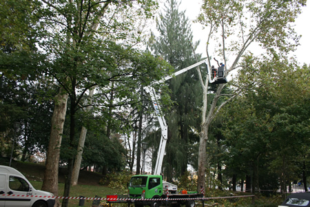 Proseguono gli interventi di Amia Verona per la potatura degli alberi