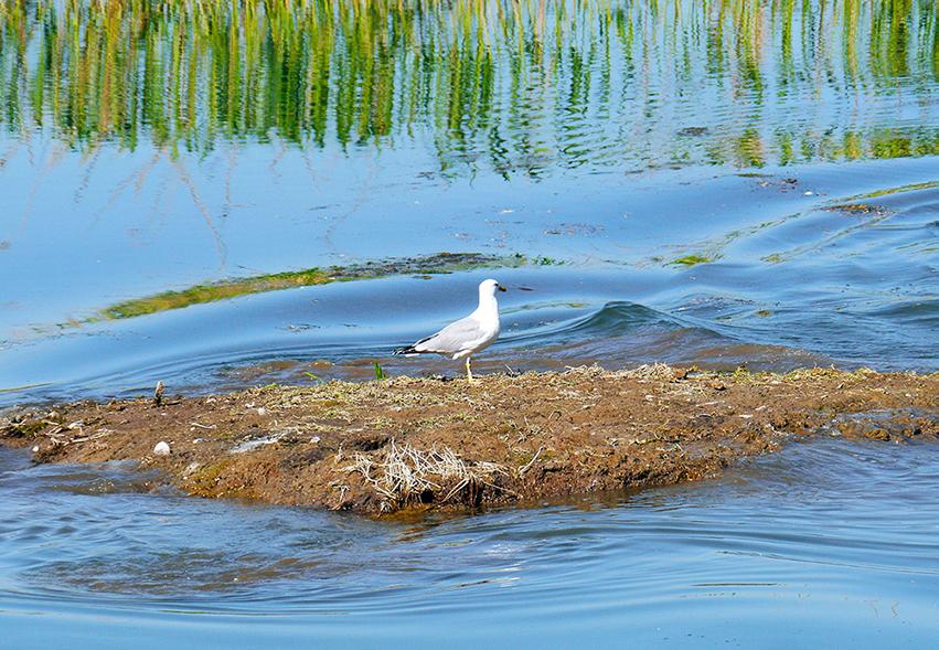 Il Consorzio Bacchiglione è impegnato a favore della biodiversità nella zona lagunare